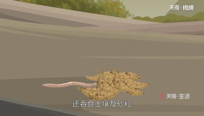 地龙是什么  什么是地龙
