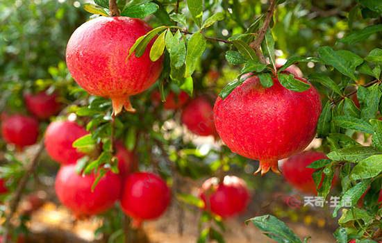 凉山特色水果
