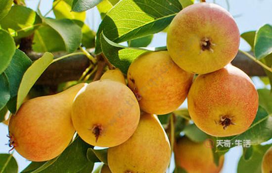 内蒙古特色水果