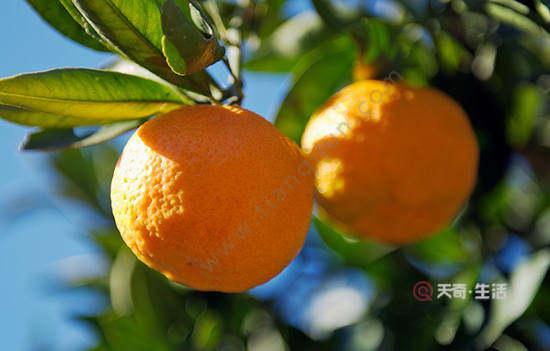 珠海特色水果