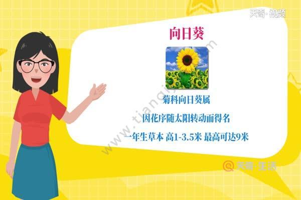 向日葵传播种子的方法 向日葵有什么传播种子的方法