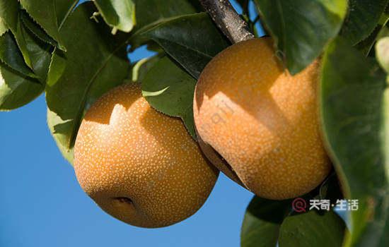 衢州特色水果