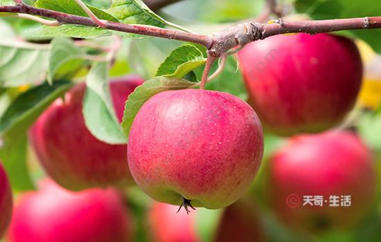 西藏特色水果