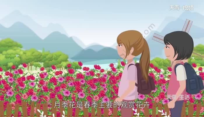 月季花的品种 月季大花有哪些品种