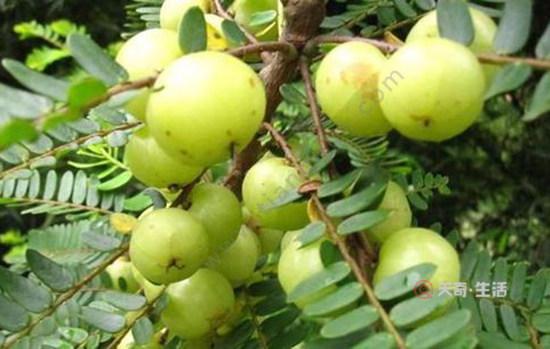 汕尾特色水果