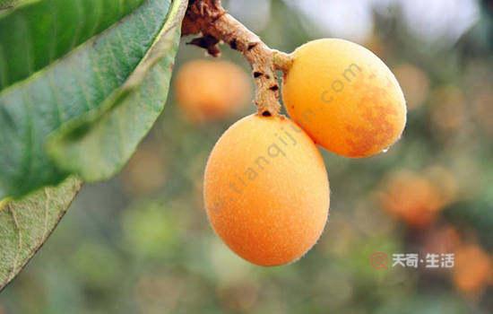 黄山特色水果