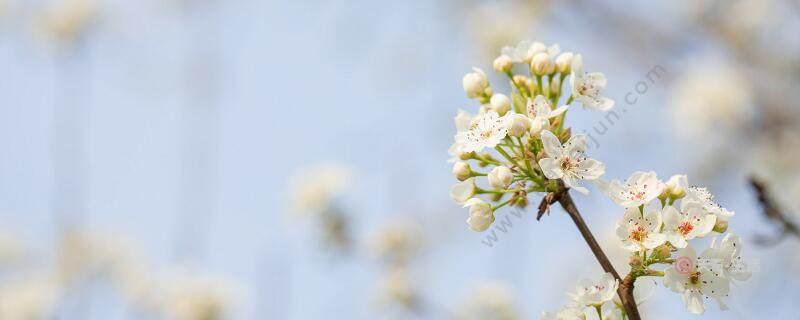 驿路梨花中描写梨花的句子