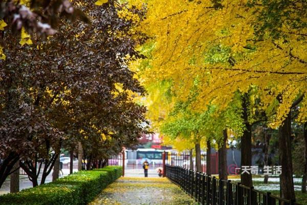空山新雨后天气晚来秋是谁的诗