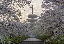 包头市春季赏花去哪里 推荐包头市春季赏花景点
