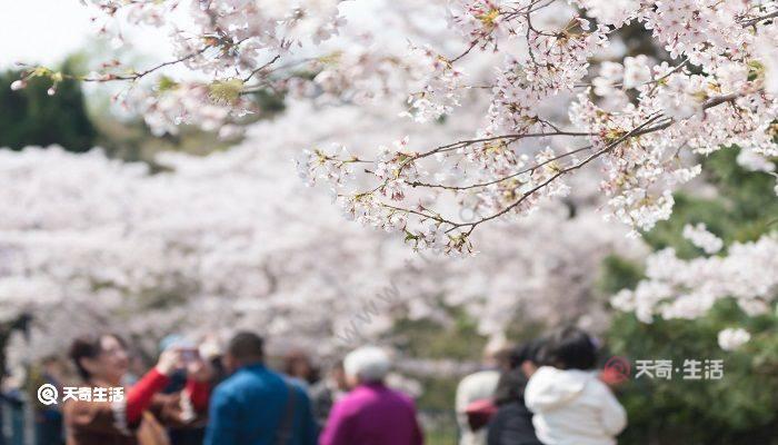 包头市春季赏花去哪里