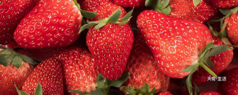 北京昌平草莓的主要品种有哪些